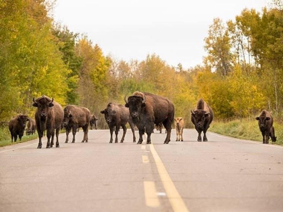 Elk Island National Park and Beaver Hills