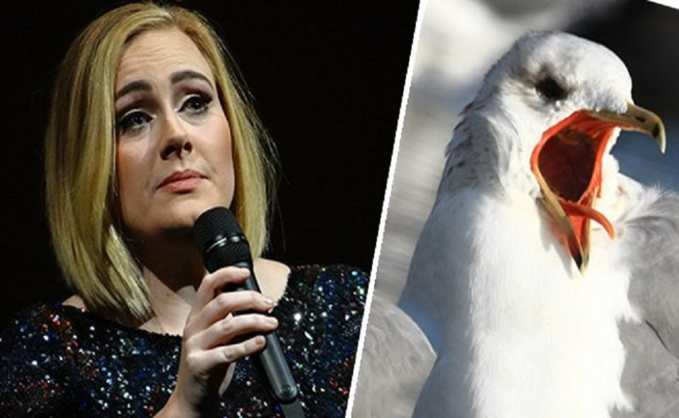 Singer Adele's Fear of Seagulls